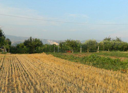 """Era situato in località Pezzagrande l'""""aeroporto"""" alleato di Pignataro Maggiore"""
